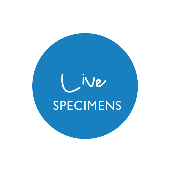 mdc-icon-live specimens link